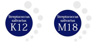 Streptococcus salivarius